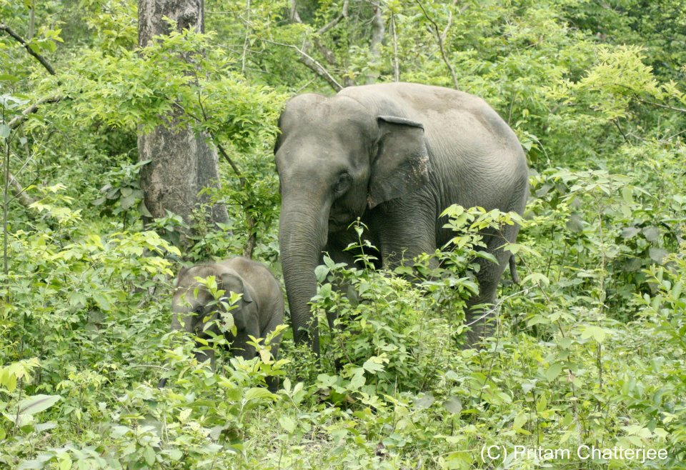 elephant National Park In West Bengal