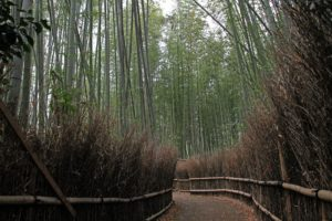 Sagiano Bamboo forest 7 Weirdest Places in the world