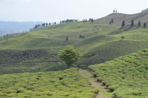 offbeat places near Darjeeling